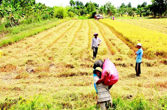 Định vị thương hiệu gạo Việt - Ảnh 1.