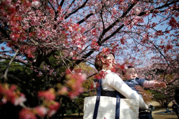 Rực rỡ mùa hoa anh đào Nhật Bản - Ảnh 5.