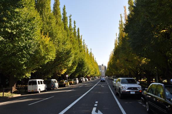Độc đáo con đường rợp bóng bạch quả ở Nhật Bản - Ảnh 5.