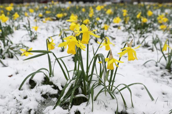 Tuyết rơi mùa xuân ở Anh - Ảnh 11.