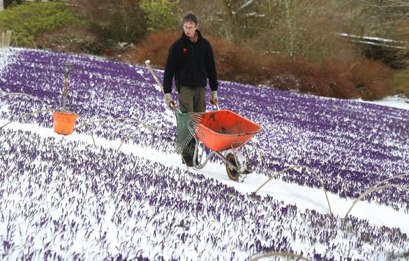 Tuyết rơi mùa xuân ở Anh - Ảnh 3.