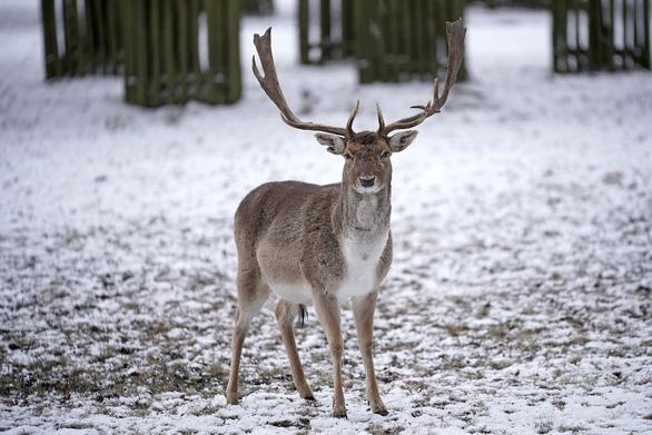 Tuyết rơi mùa xuân ở Anh - Ảnh 8.