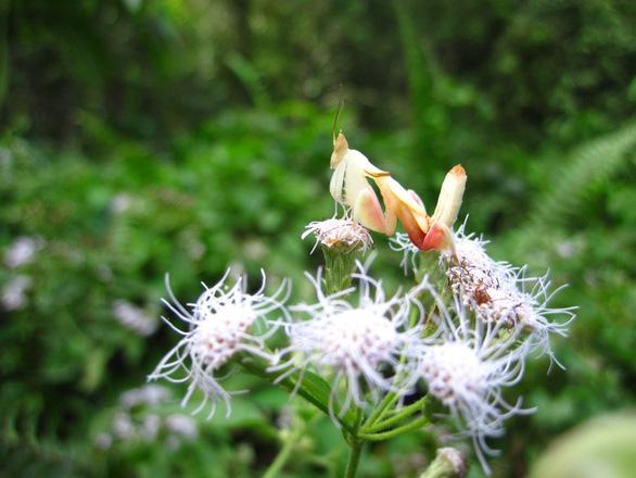 Đỏ mắt soi những động vật hệt như hoa cỏ - Ảnh 1.