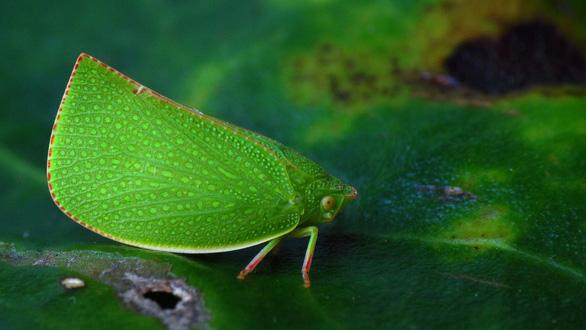 Đỏ mắt soi những động vật hệt như hoa cỏ - Ảnh 5.