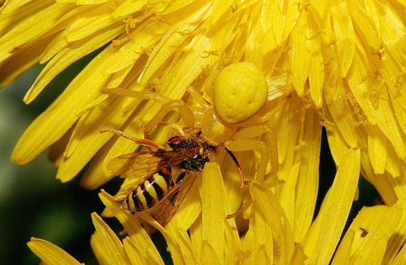 Đỏ mắt soi những động vật hệt như hoa cỏ - Ảnh 7.
