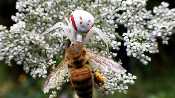 Đỏ mắt soi những động vật hệt như hoa cỏ - Ảnh 6.