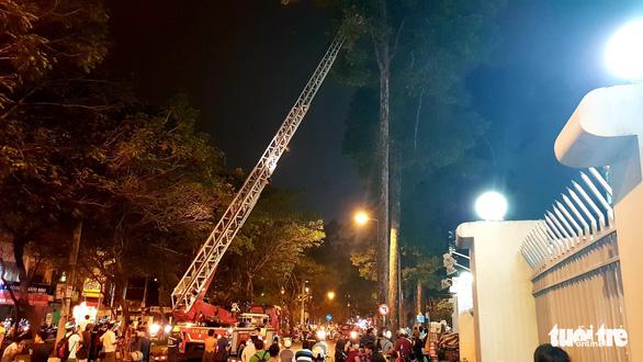Cảnh sát cứu hỏa phá bốn tổ ong mật trên cây cao trong đêm - Ảnh 4.