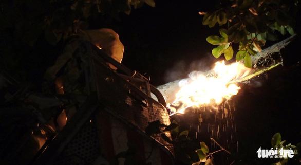 Cảnh sát cứu hỏa phá bốn tổ ong mật trên cây cao trong đêm - Ảnh 9.