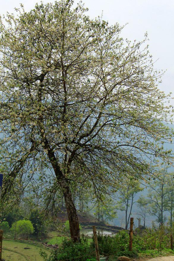 Tháng 3, mình giữ lại một mùa xuân - Ảnh 3.