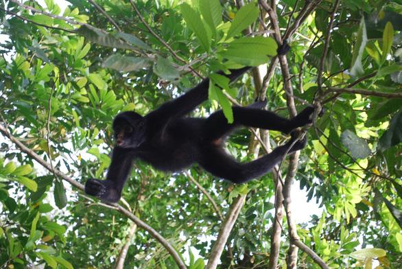 Những động vật bên bờ tuyệt chủng - Ảnh 12.
