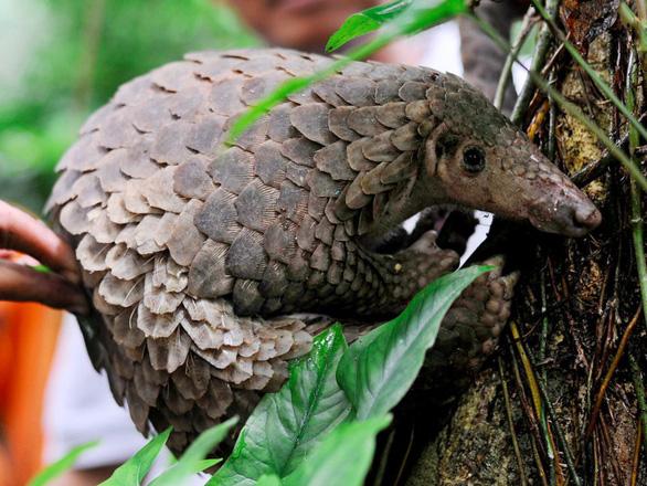 Những động vật bên bờ tuyệt chủng - Ảnh 9.