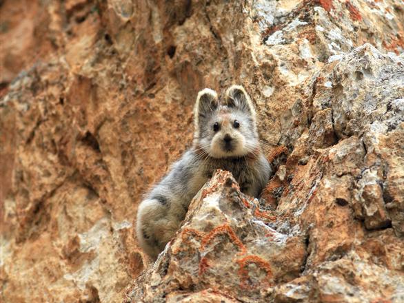 Những động vật bên bờ tuyệt chủng - Ảnh 3.