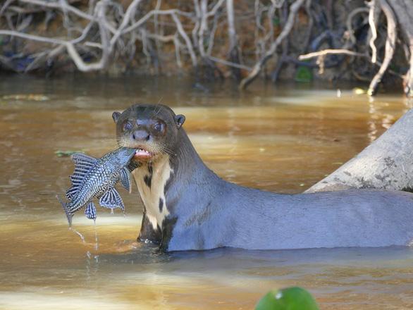 Những động vật bên bờ tuyệt chủng - Ảnh 4.