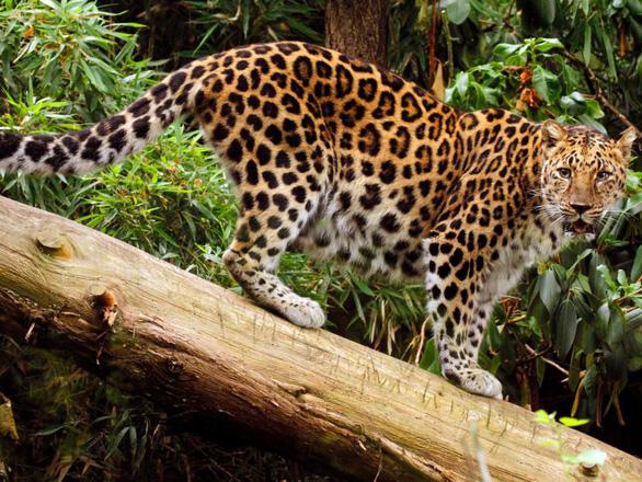 Những động vật bên bờ tuyệt chủng - Ảnh 5.