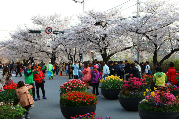 Rộn ràng mùa lễ hội hoa Hàn Quốc - Ảnh 5.
