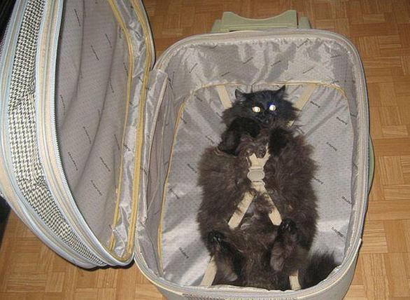 Loạt ảnh ngộ nghĩnh về vali du lịch - Ảnh 1.