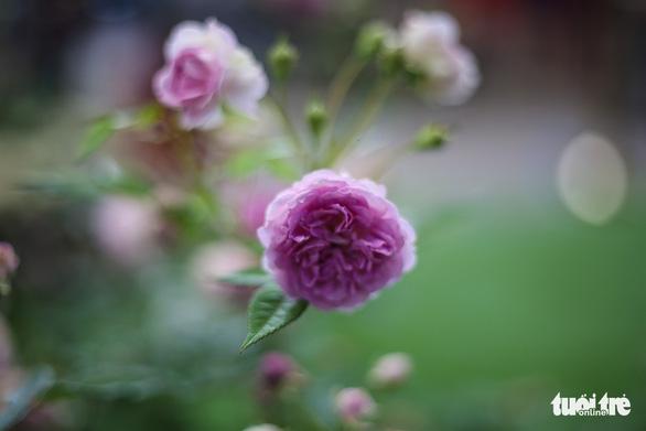 Lễ hội hoa hồng Bulgaria sửa sai, người dân được đền bù - Ảnh 3.