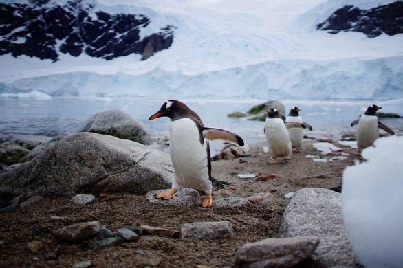 Ngắm vẻ đẹp băng giá và chim cánh cụt ở Nam cực - Ảnh 16.