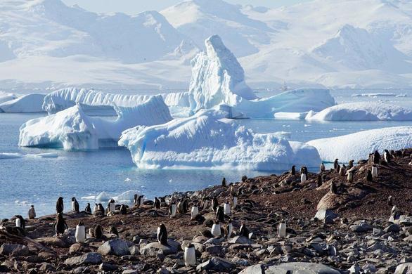 Ngắm vẻ đẹp băng giá và chim cánh cụt ở Nam cực - Ảnh 2.