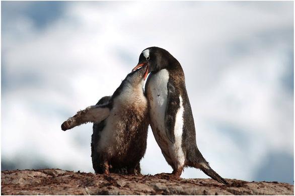Ngắm vẻ đẹp băng giá và chim cánh cụt ở Nam cực - Ảnh 3.