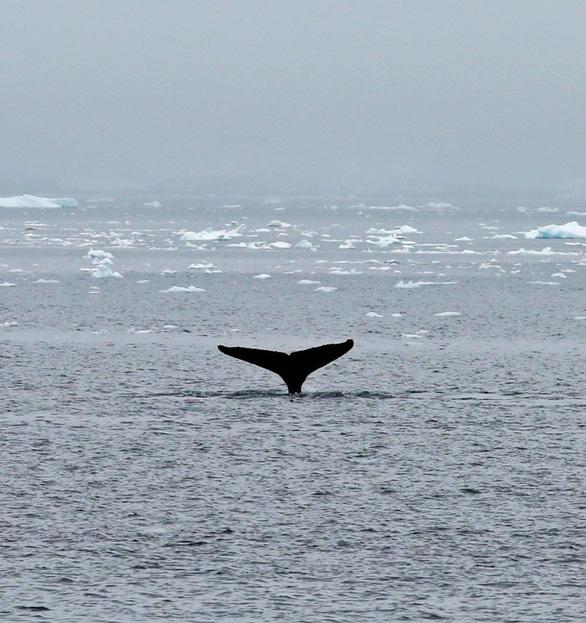 Ngắm vẻ đẹp băng giá và chim cánh cụt ở Nam cực - Ảnh 4.