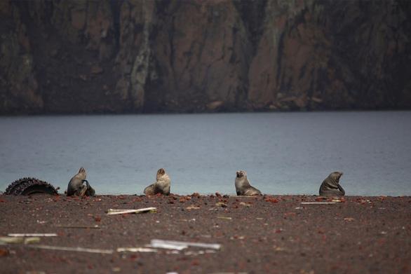 Ngắm vẻ đẹp băng giá và chim cánh cụt ở Nam cực - Ảnh 5.