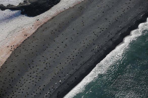 Ngắm vẻ đẹp băng giá và chim cánh cụt ở Nam cực - Ảnh 6.