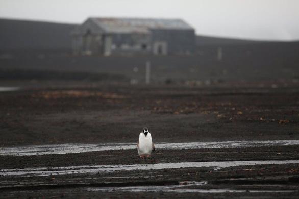 Ngắm vẻ đẹp băng giá và chim cánh cụt ở Nam cực - Ảnh 9.