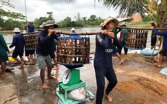Xuất khẩu cá tra sang Trung Quốc tăng nóng - Ảnh 1.