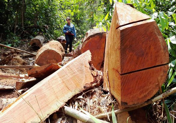 Xót rừng bị phá, nửa đêm phó chủ tịch tỉnh viết tâm thư gửi kiểm lâm - Ảnh 3.