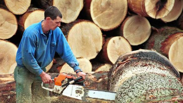 Trung Quốc mua gom gỗ, thợ Bỉ chết điếng vì mất việc - Ảnh 1.