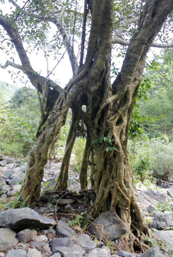 Về Ba Tơ, ngắm thác Cao Muôn hoang sơ - Ảnh 2.