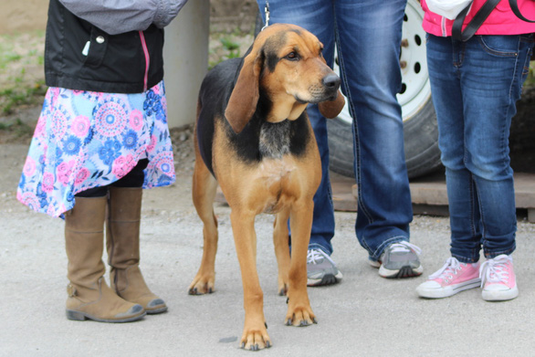 Độc đáo lễ hội tôn vinh chú chó nổi tiếng Old Drum - Ảnh 10.
