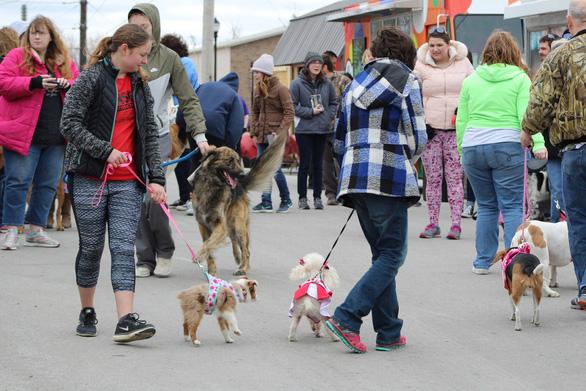 Độc đáo lễ hội tôn vinh chú chó nổi tiếng Old Drum - Ảnh 11.