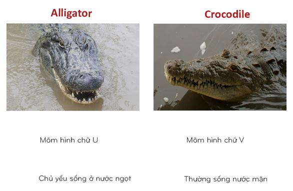 8 cặp động vật dễ bị nhầm tên khi dịch từ Anh sang Việt - Ảnh 1.