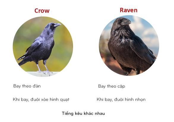 8 cặp động vật dễ bị nhầm tên khi dịch từ Anh sang Việt - Ảnh 7.