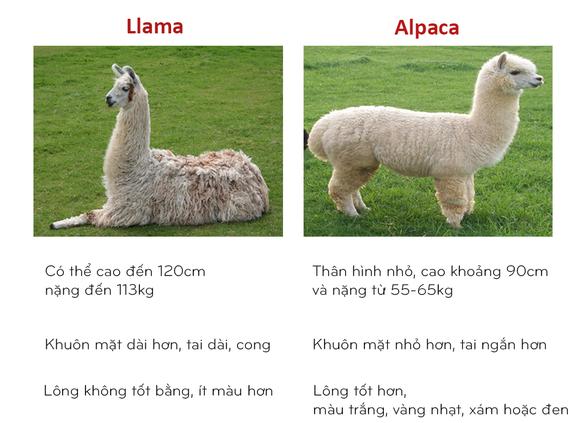 8 cặp động vật dễ bị nhầm tên khi dịch từ Anh sang Việt - Ảnh 3.