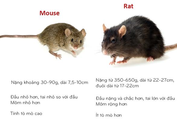8 cặp động vật dễ bị nhầm tên khi dịch từ Anh sang Việt - Ảnh 2.