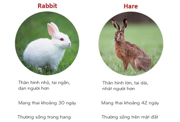 8 cặp động vật dễ bị nhầm tên khi dịch từ Anh sang Việt - Ảnh 5.