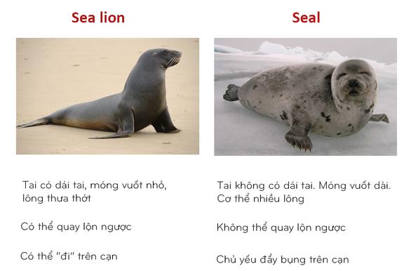 8 cặp động vật dễ bị nhầm tên khi dịch từ Anh sang Việt - Ảnh 8.