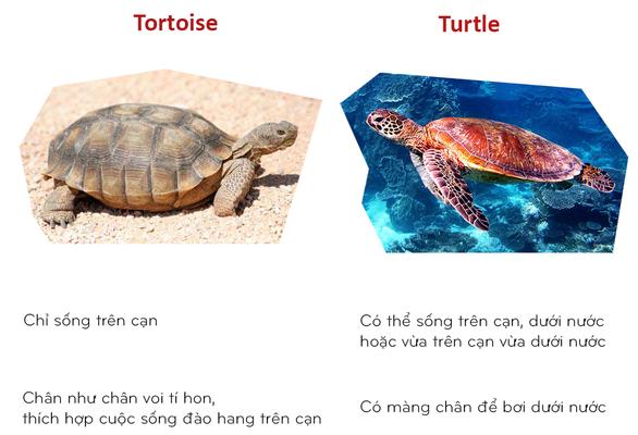 8 cặp động vật dễ bị nhầm tên khi dịch từ Anh sang Việt - Ảnh 4.