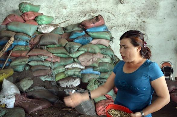 Khởi tố vụ án vỏ cà phê nhuộm pin tại Đắk Nông, tạm giữ 6 người - Ảnh 2.