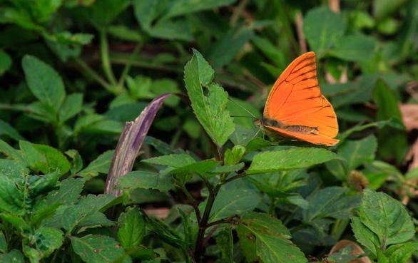 Tháng 4, đến rừng Cúc Phương săn bướm - Ảnh 4.