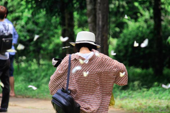 Tháng 4, đến rừng Cúc Phương săn bướm - Ảnh 3.