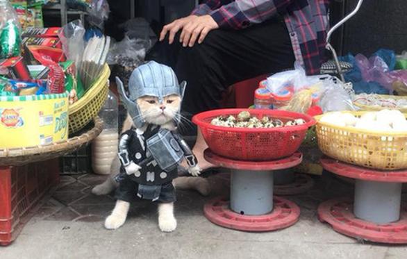 Chú mèo tên Chó hóa siêu anh hùng đi bán gà - Ảnh 1.