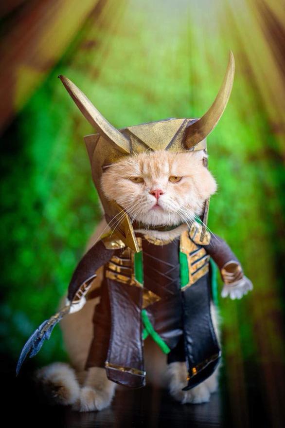 Chú mèo tên Chó hóa siêu anh hùng đi bán gà - Ảnh 4.