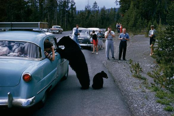 6 tai nạn cần lưu ý khi đi chơi công viên hoang dã - Ảnh 1.
