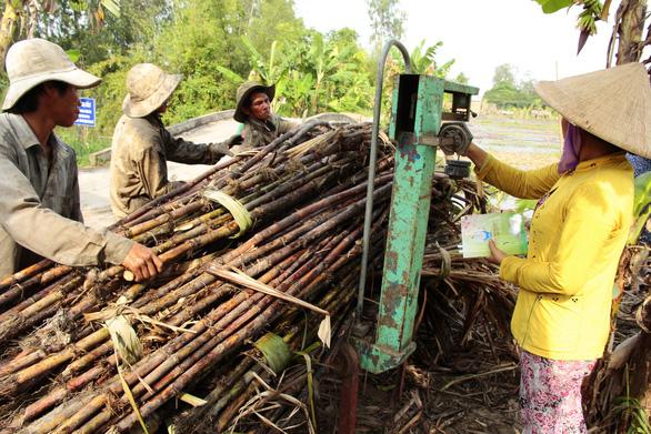 Bộ trưởng khuyên doanh nghiệp dùng bã mía trồng nấm - Ảnh 1.