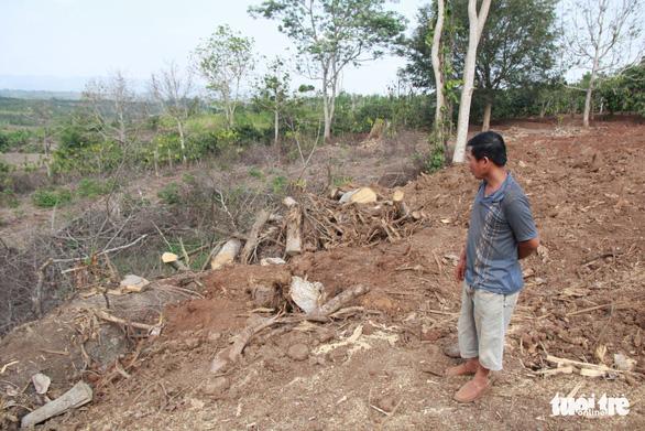 Hai cây siêu khủng không khai thác từ xã Ea Hồ như khai báo - Ảnh 2.