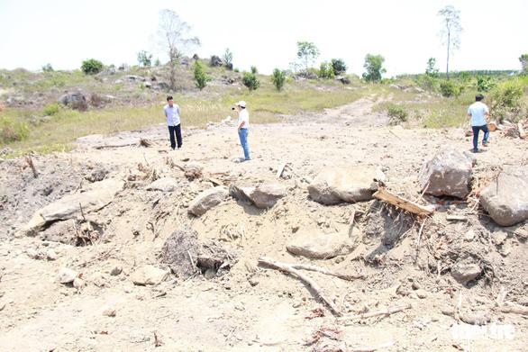 Hai cây siêu khủng không khai thác từ xã Ea Hồ như khai báo - Ảnh 1.